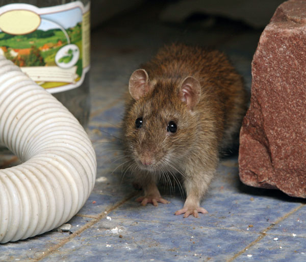 Rodent Barriers